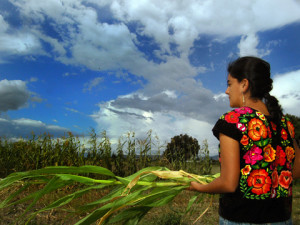The first maize or corn plants in the world were grown in Mexico thousands of years ago (Images by Adriana Chow)