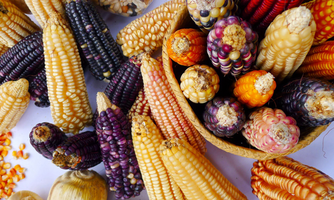 http://www.yesmagazine.org/planet/four-ways-mexico-indigenous-farmers-agriculture-of-the-future-20150810