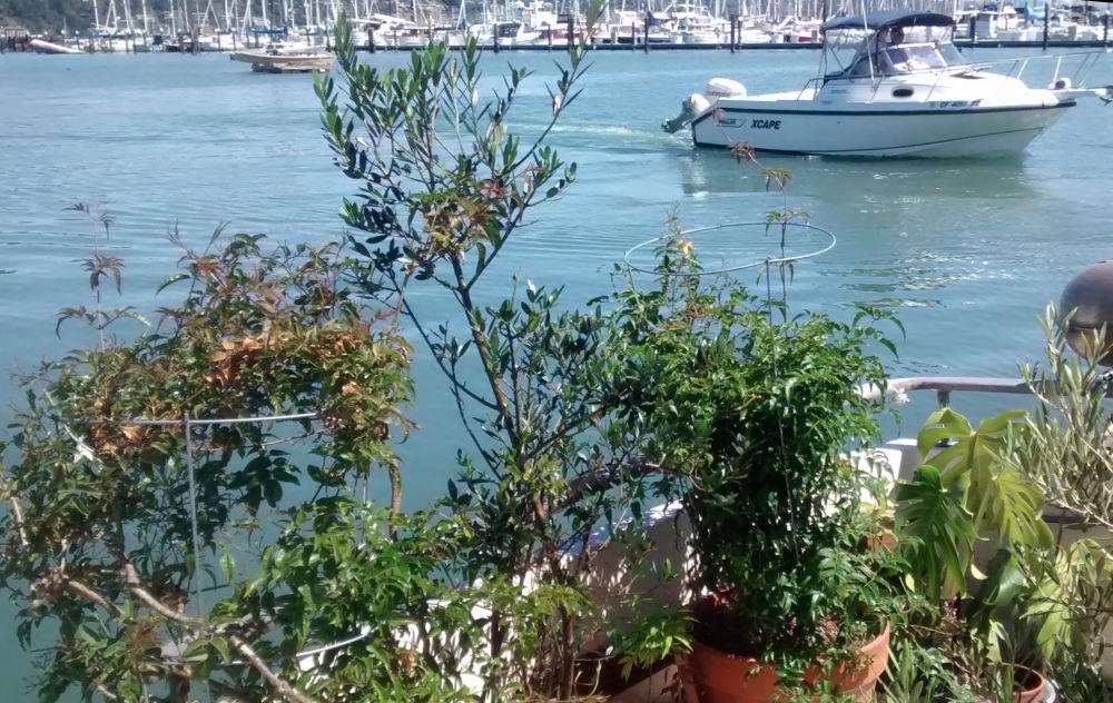 Jane Sloane - Sausalito Boat Garden