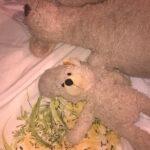 Bear and Boo